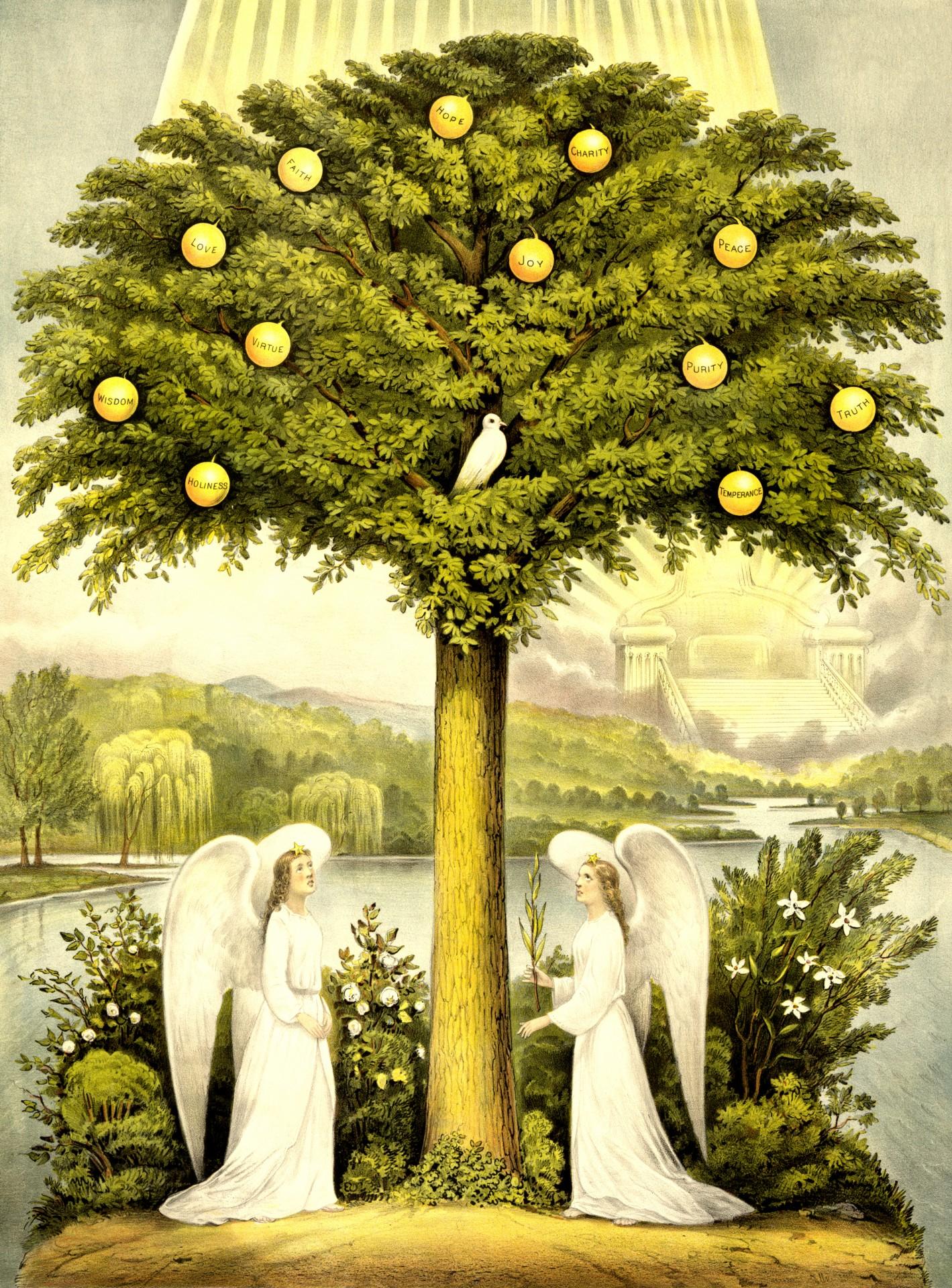 Tree Of Life Free Stock Photo
