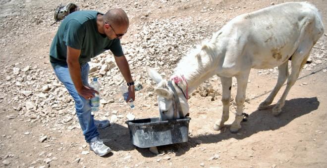 Burro sediento en las colinas de Palestina / L.L.R