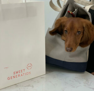 Wren the pup at Sweet Generation's new location