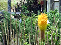 09_jardinesMaitencillo