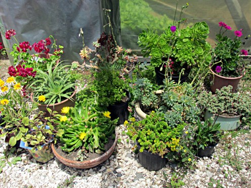 23_jardinesMaitencillo