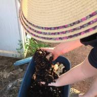 Monica digging the worms to spread around the gardens.