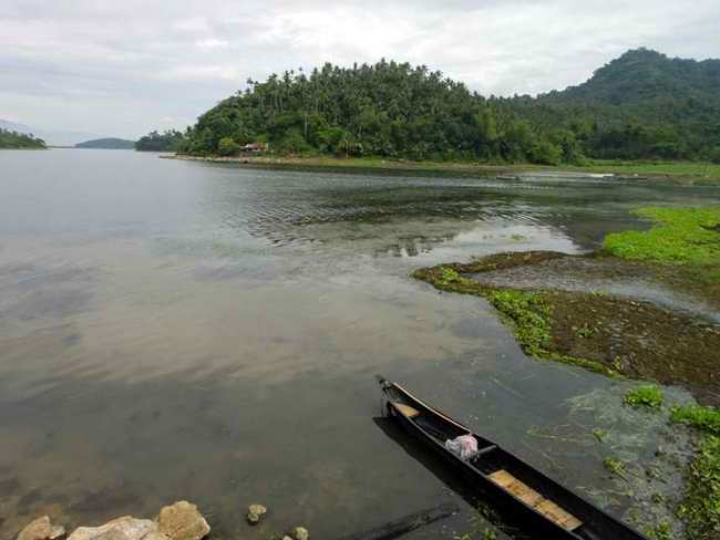 Lake Naujan – Mindoro, Fewer Migratory Bird Species Counted