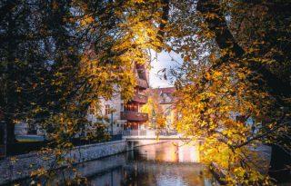 Die Zeit der goldenen Blätter