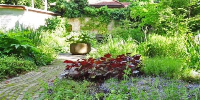 Grüner ehemaliger Klosterhof, Kräuter und Schattenpflanzen im Südpark