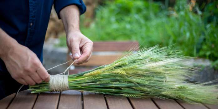 Getreide-Deko: Natürliche Schönheit für Zuhause