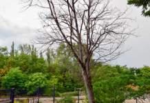 ein Baum ohne Blätter umgeben von grünen Sträuchern, Büschen und Bäumen