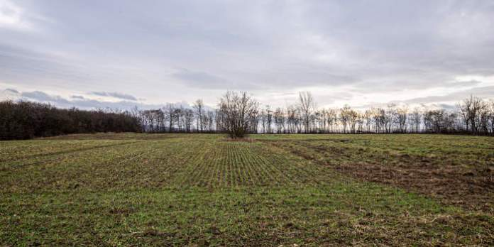 Ein Feld mit Waldsaum