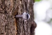 eine Schraube steckt in einer Baumrinde
