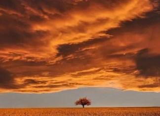 ein Feld mit einem einzelnen Baum, darüber eine Wolkenfront
