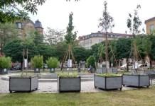 Bäume in Pflanzkübeln stehen in einer Grünanlage