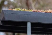 Das Dach eines Wartehäuschens, auf dem kleine Pflanzen zu sehen sind.