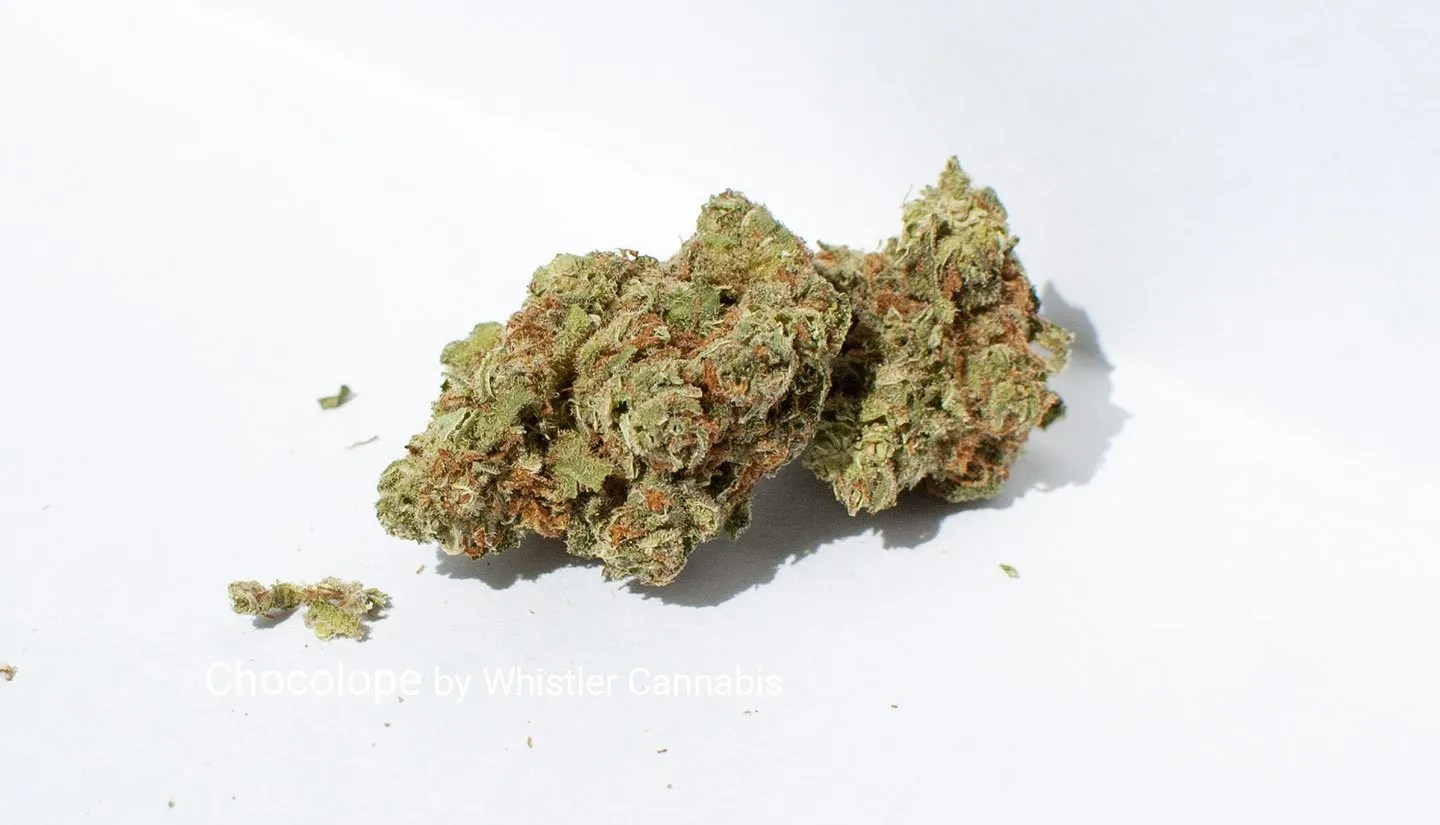 Sativa Chocolope by Whistler Cannabis