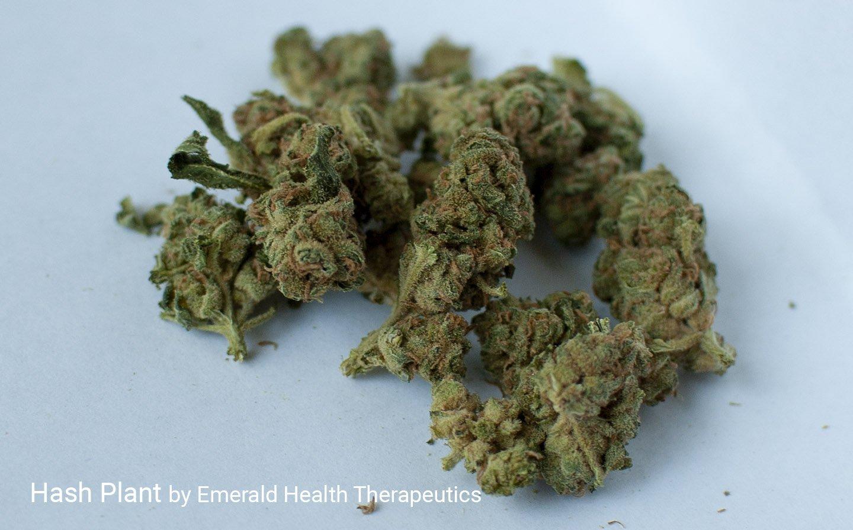Hash Plant strain by Emerald Health Therapeutics