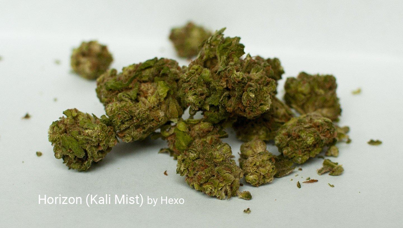 sativa cannabis