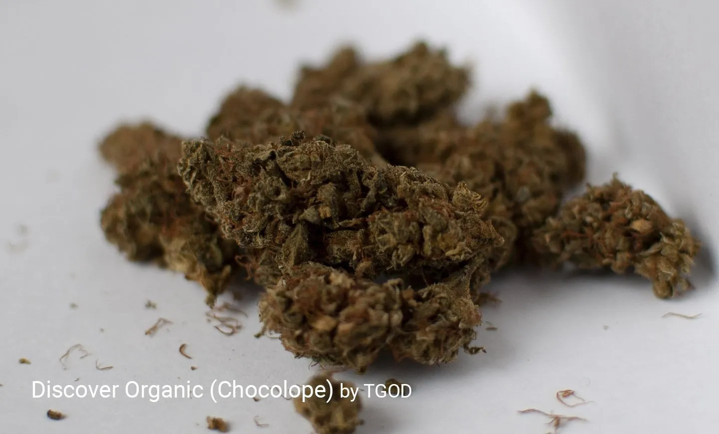 Reviewing Discover Organic aka Chocolope