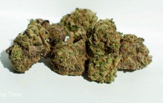 18.95% THC B-Mac by Truro