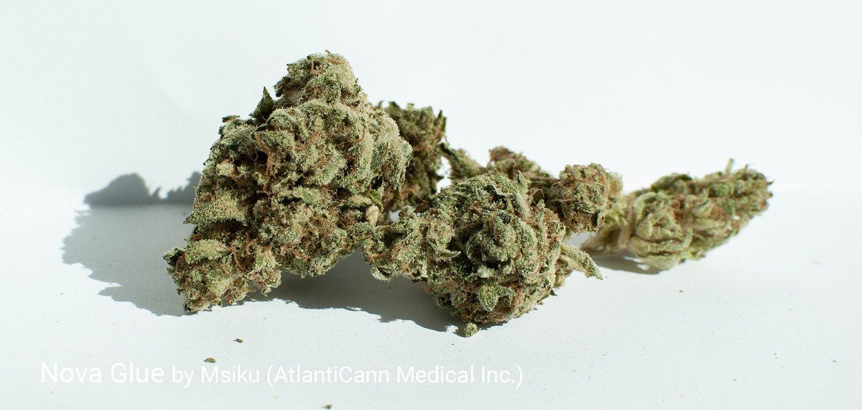 25.4% THC Nova Glue by Msiku
