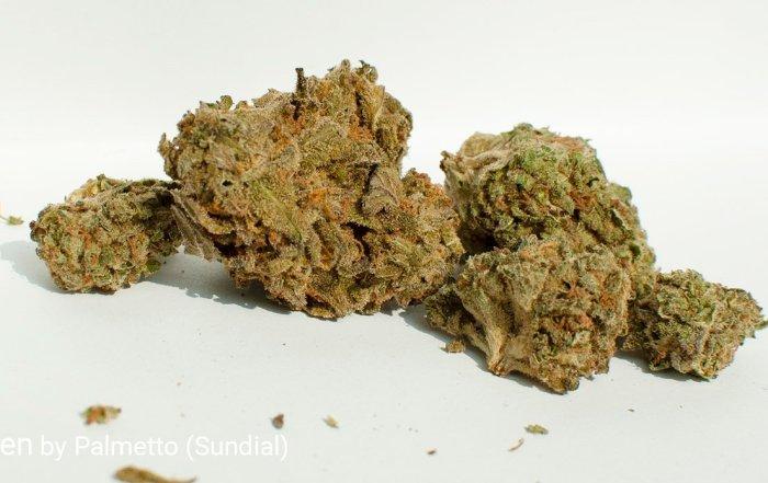 19.1% THC Nuken by Palmetto