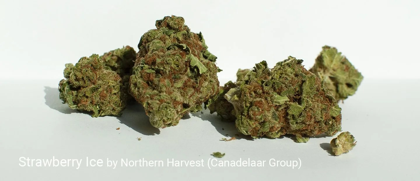 17.263% THC Strawberry Ice by Northern Harvest