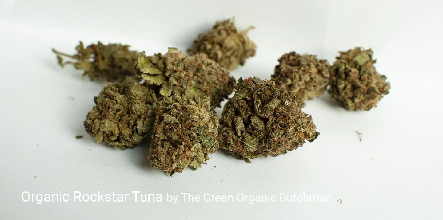 22.44% THC Organic Rockstar Tuna by The Green Organic Dutchman