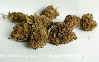 22.44% THC Organic Rockstar Tuna by The Green Organic Dutchman