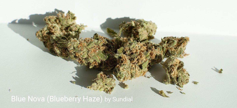 20.3% THC Blue Nova by Sundial