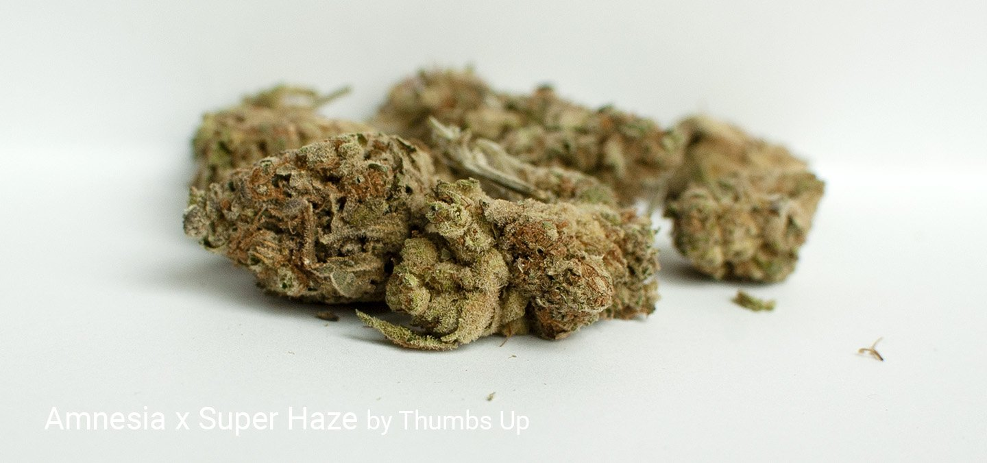 21.32% THC Amnesia x Super Haze by Thumbs Up