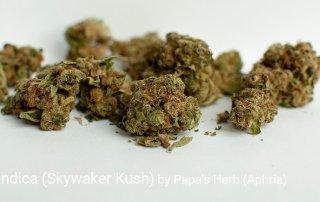 19.24% THC Papa's Indica aka Skywalker Kush by Papa's Herb