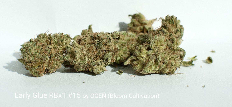 21.0% THC Early Glue RBx1 #15 by OGEN