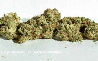18.45% THC Gelato by Gage Cannabis