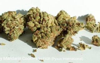 20.6% THC Go Play Mandarin Cookies by FIGR