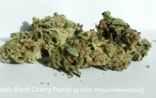 20.8% THC 1.3% Terpenes Go Steady Black Cherry Punch by FIGR