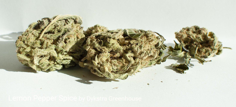 21.03% THC Lemon Pepper Spice by Dykstra Greenhouse