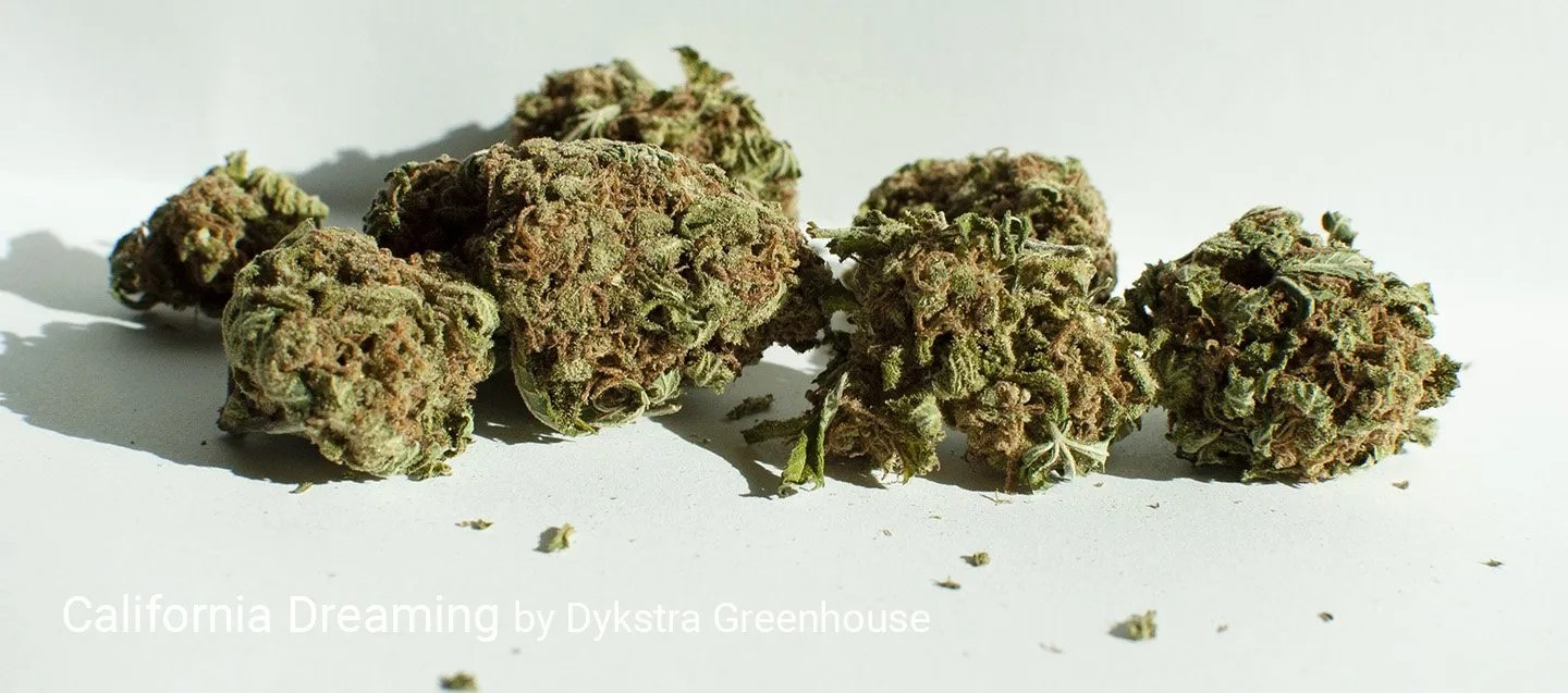 18.63% THC California Dreaming by Dykstra Greenhouse