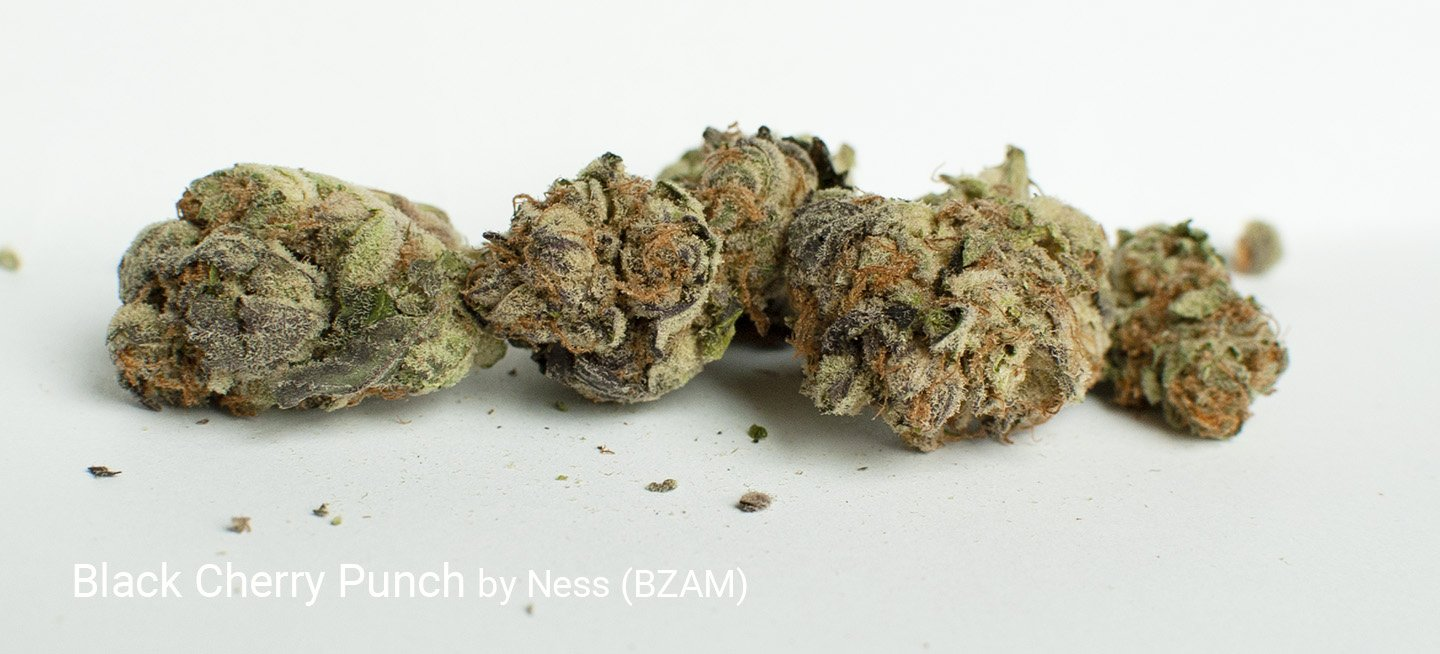 20.26% THC Black Cherry Punch by Ness