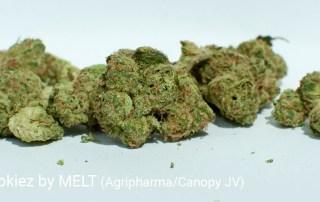 25.96% THC 5.4% Terpenes GMO Cookiez by MELT