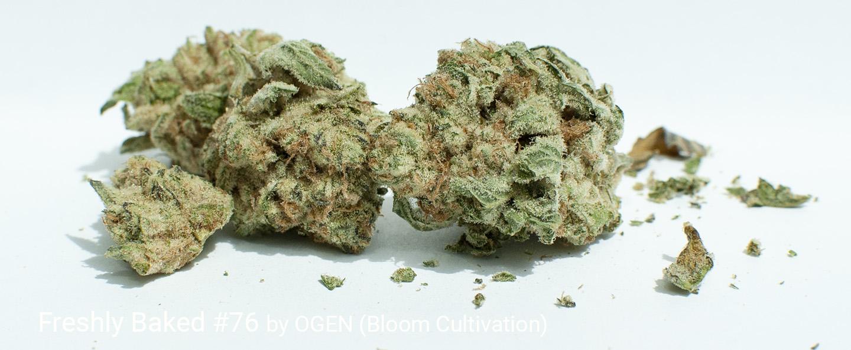 22.2% THC Freshly Baked #76 by OGEN