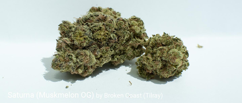 22.8% THC Muskmelon OG (Saturna) by Broken Coast