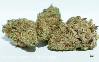21.1% THC MAC-1 by Edison Cannabis