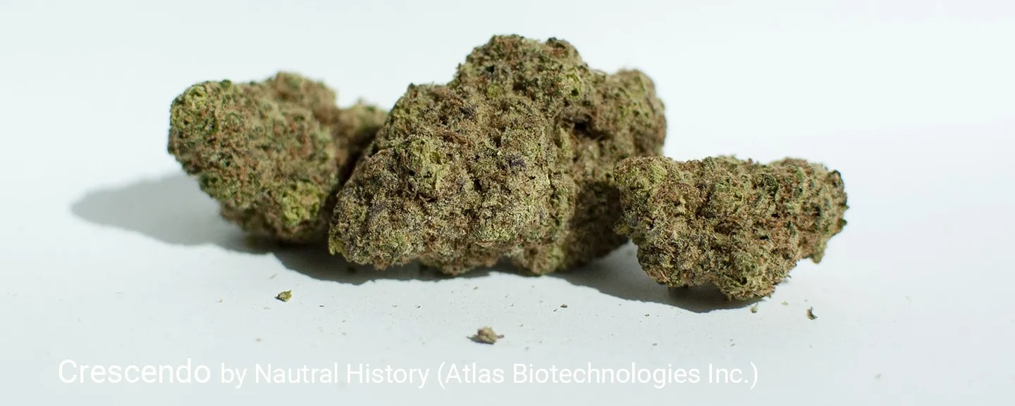 23.7% THC 2.1% Total Terpenes Crescendo by Natural History