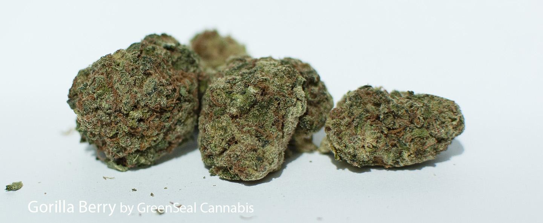 24.16% THC Gorilla Berry by GreenSeal Cannabis
