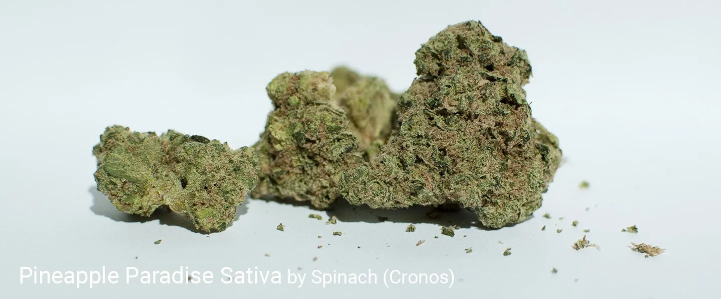20.0% THC Pineapple Paradise Sativa by Spinach