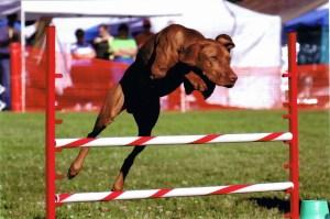 Jag agility