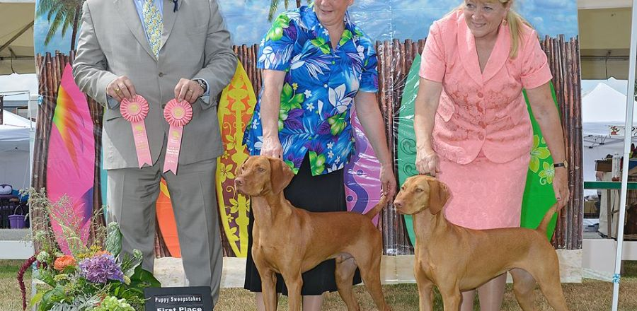 Puppy Sweeps First Place
