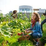 offerta di lavoro per braccianti agricoli