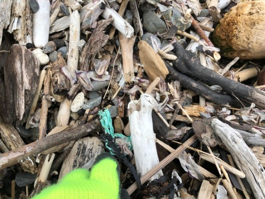 Photo of gloved hand and piece of green plastic rubbish