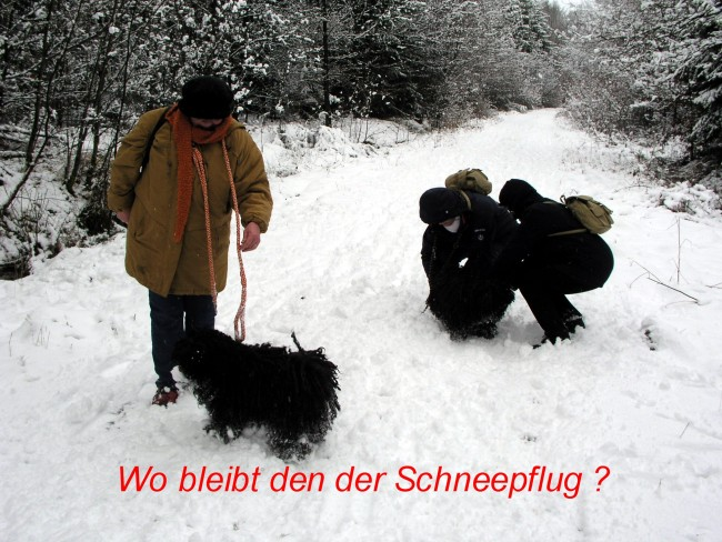 Puli Winterwanderung in Belg Schneepflug
