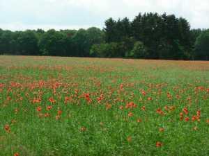 Puli Wanderung in Echt in Holland @ Echt | Echt | Limburg | Niederlande