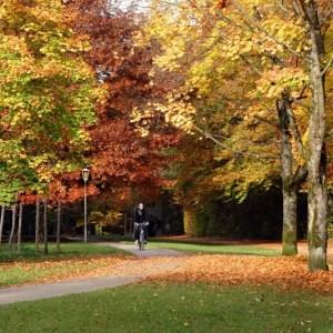 Verfärbtes Laub auf den Bäumen an der Hochleite, teilweise liegen schon Blätter auf dem Boden. Ein Radfahrer fährt auf dem Fahrradweg